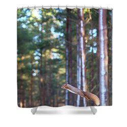 Leaping Red Squirrel Tall Shower Curtain