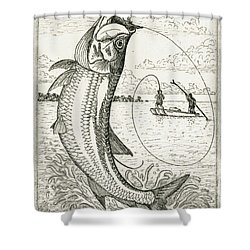 Shower Curtain featuring the drawing Leaping Tarpon by Charles Harden