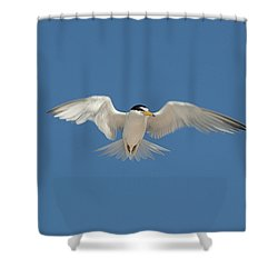 Least Tern 2 Shower Curtain by Kenneth Albin