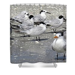 Least Terns Shower Curtain