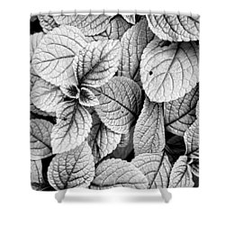 Leaves Black And White - Nature Photography Shower Curtain