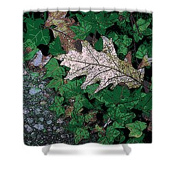 Leaves Shower Curtain by John Rossman