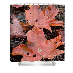 Leaves-old Leaves Shower Curtain