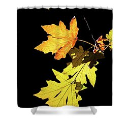 Leaves On Black Shower Curtain