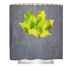 Shower Curtain featuring the photograph Leaves Through Maple Leaf On Texture 2 by Gary Slawsky