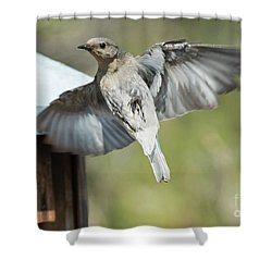 Leaving Home Shower Curtain by Mike Dawson