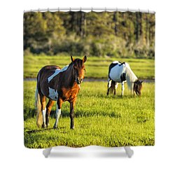 Leaving The Chincoteague Ponies Shower Curtain