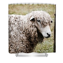 Leicester Longwool Shower Curtain