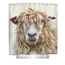 Leicester Longwool Sheep Shower Curtain