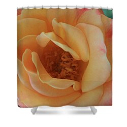 Lemon Blush Rose Shower Curtain by Marna Edwards Flavell