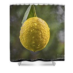 Shower Curtain featuring the photograph Lemon Fresh by Mitch Shindelbower