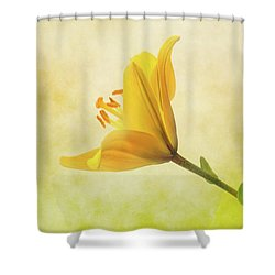 Shower Curtain featuring the photograph Lemon Lily by Roy McPeak