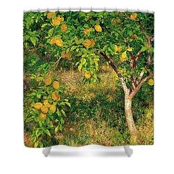 Shower Curtain featuring the painting Lemon Tree by Henry Scott Tuke