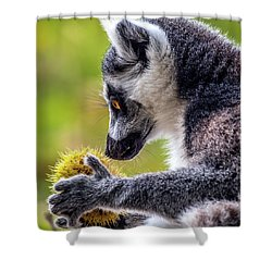 Lemur And Sweet Chestnut Shower Curtain