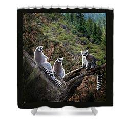 Lemur Family Shower Curtain by Melinda Hughes-Berland