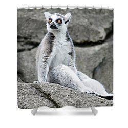 Lemur The Cutie Shower Curtain
