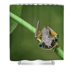 Shower Curtain featuring the photograph Lemur Tree Frog - 1 by Nikolyn McDonald