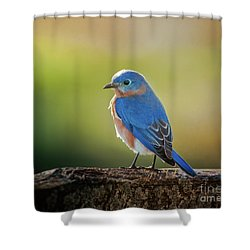 Lenore's Bluebird Shower Curtain
