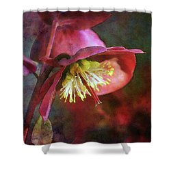 Lenten Rose Bowing To The Sun 8712 Idp_2 Shower Curtain