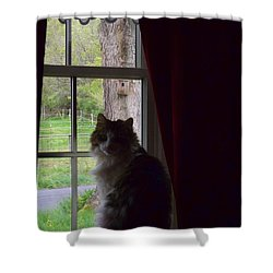 Leo In The Window Shower Curtain