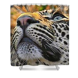 Leopard Aloft Shower Curtain
