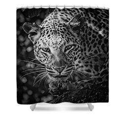 Leopard, Black And White Shower Curtain