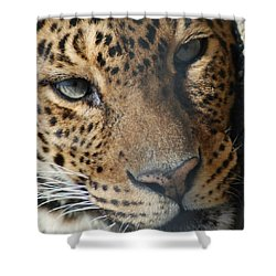 Shower Curtain featuring the photograph Leopard Face by Richard Bryce and Family