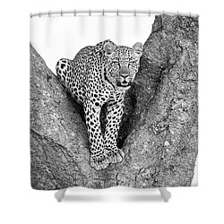Leopard In A Tree Shower Curtain by Richard Garvey-Williams