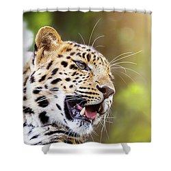 Leopard In Sunlight Shower Curtain