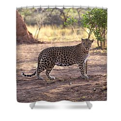 Leopard Shower Curtain by Keith Levit