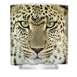 Leopard Panthera Pardus Female Shower Curtain by Martin Van Lokven