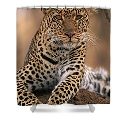 Leopard Panthera Pardus, Masai Mara Shower Curtain by Anup Shah