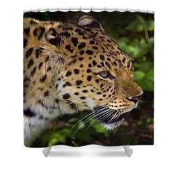Shower Curtain featuring the photograph Leopard by Steve Stuller