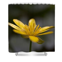 Lesser Celandine Shower Curtain