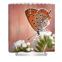 Lesser Fiery Copper Shower Curtain