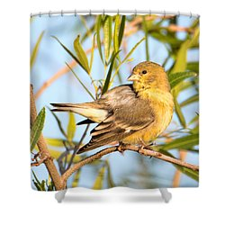 Shower Curtain featuring the photograph Lesser Goldfinch by Dan McManus
