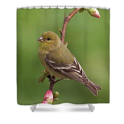 Shower Curtain featuring the photograph Lesser Goldfinch by Doug Herr