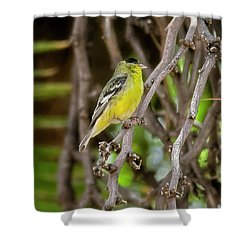 Shower Curtain featuring the photograph Lesser Goldfinch H57 by Mark Myhaver
