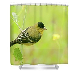 Shower Curtain featuring the photograph Lesser Goldfinch  by Ram Vasudev