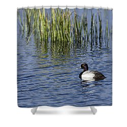 Lesser Scaup Adult Male Shower Curtain