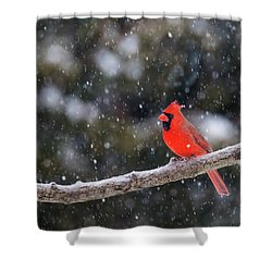 Shower Curtain featuring the photograph Let It Snow by Mircea Costina Photography