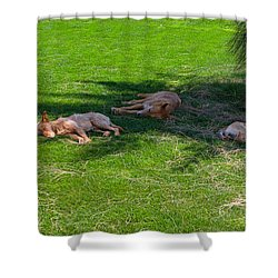 Let Sleeping Dogs Lie Shower Curtain by Louise Heusinkveld