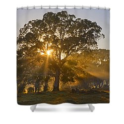 Let There Be Light Shower Curtain by Mike  Dawson