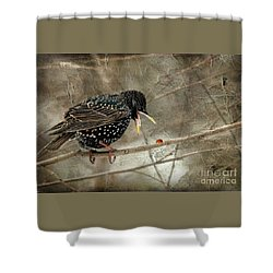 Let's Do Lunch Shower Curtain by Lois Bryan