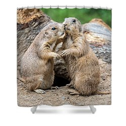 Let's Fall In Love Shower Curtain