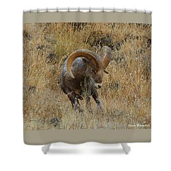 Let's Go II Shower Curtain