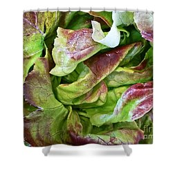 Lettuce Heart Shower Curtain by Dee Flouton