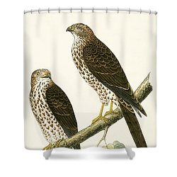 Levant Sparrow Hawk Shower Curtain by English School