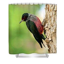 Lewis Woodpecker Shower Curtain