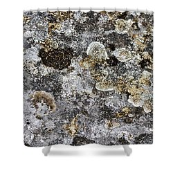 Shower Curtain featuring the photograph Lichen At The Cemetery by Stuart Litoff